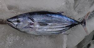 Cá ngừ Việt Nam
